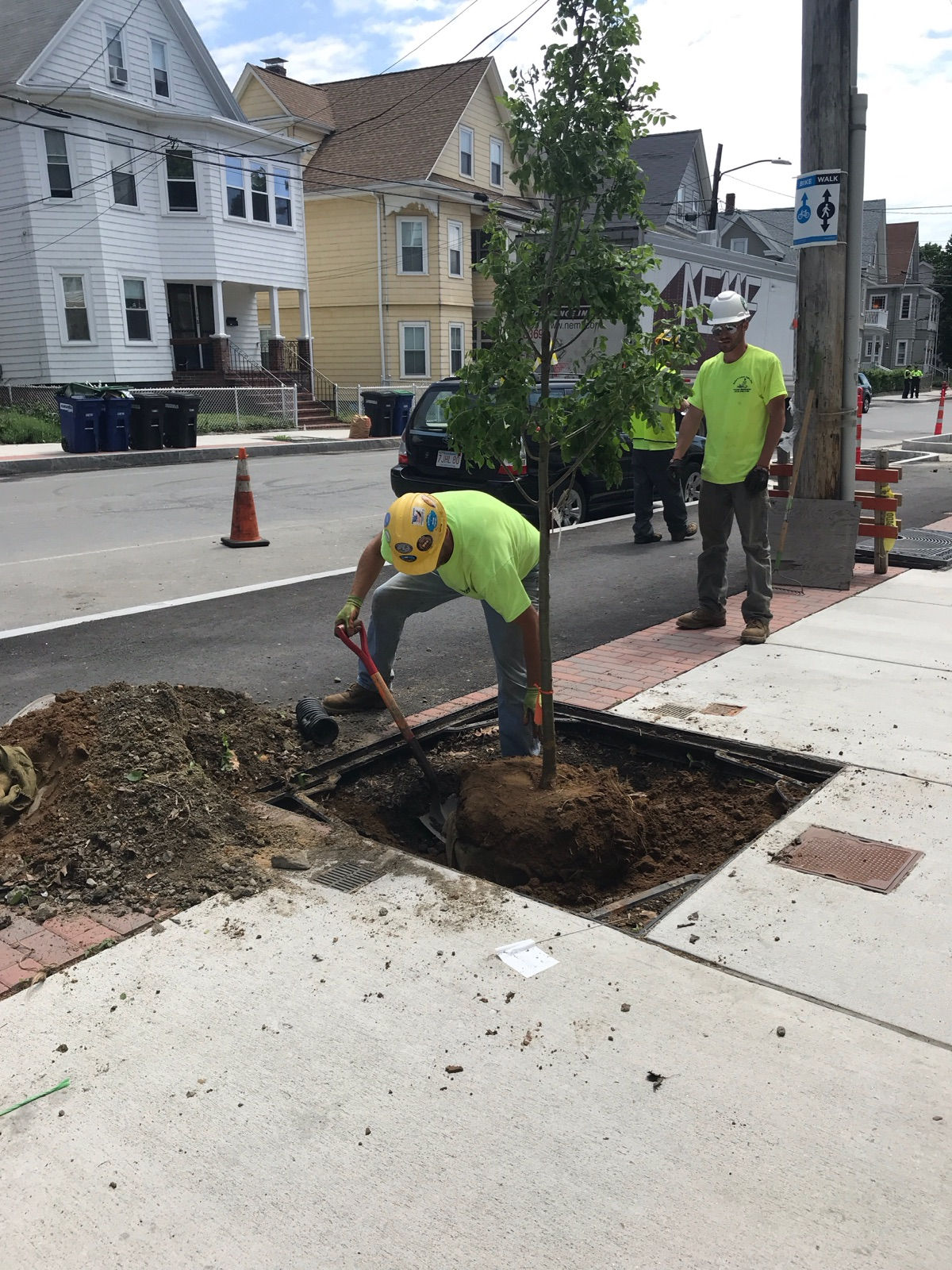 City workers plant a new tree on Beacon Street