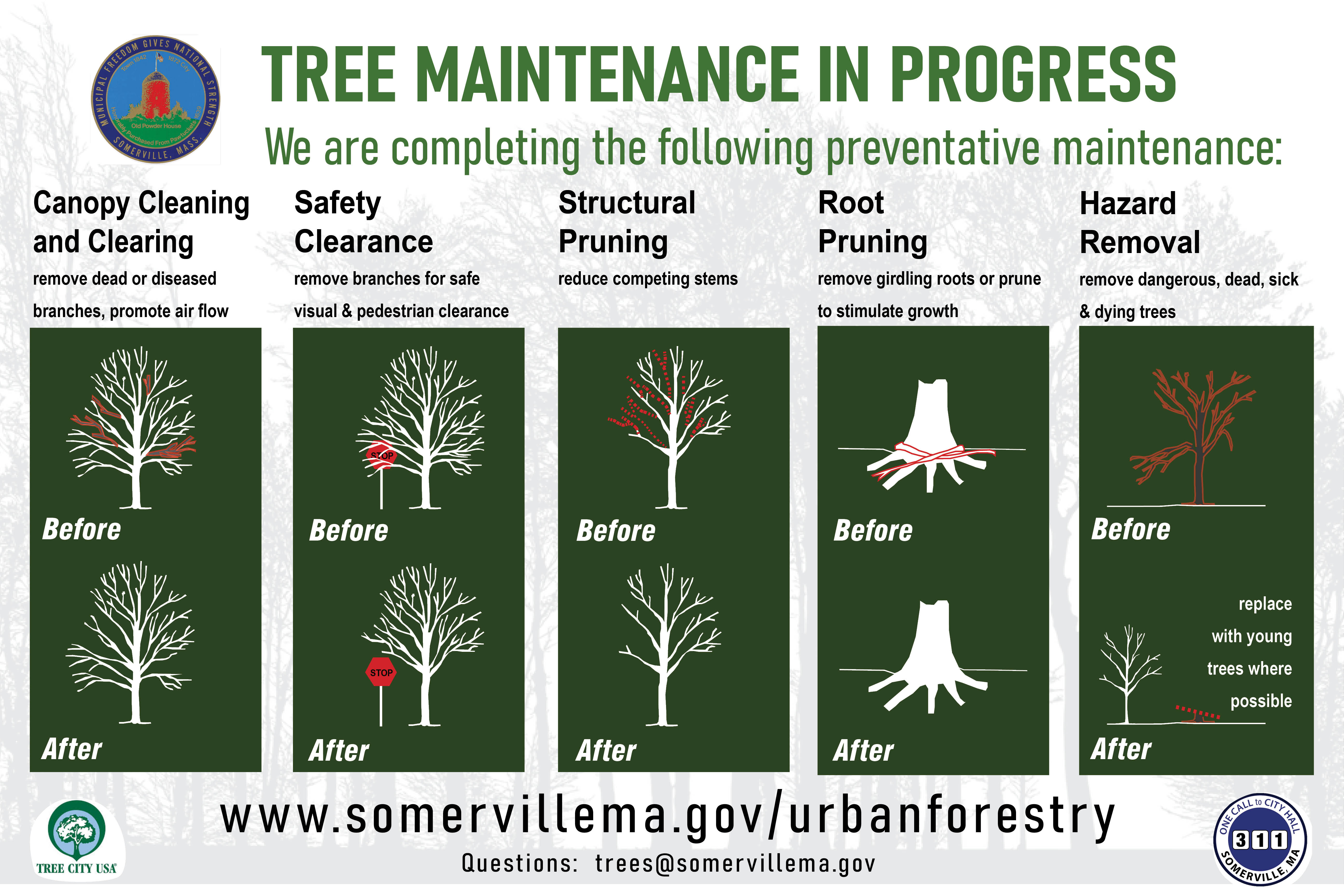 Tree maintenance in progress: canopy cleaning, safety clearance, structural pruning, root pruning, hazard removal