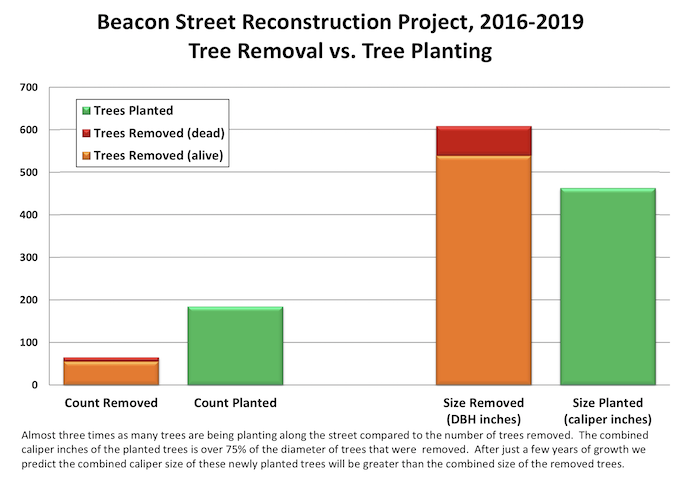 Beacon St tree removal versus planting