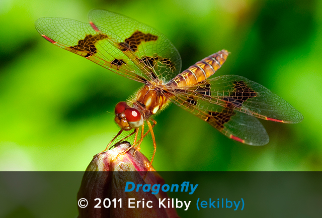 Macro photo of a dragonfly