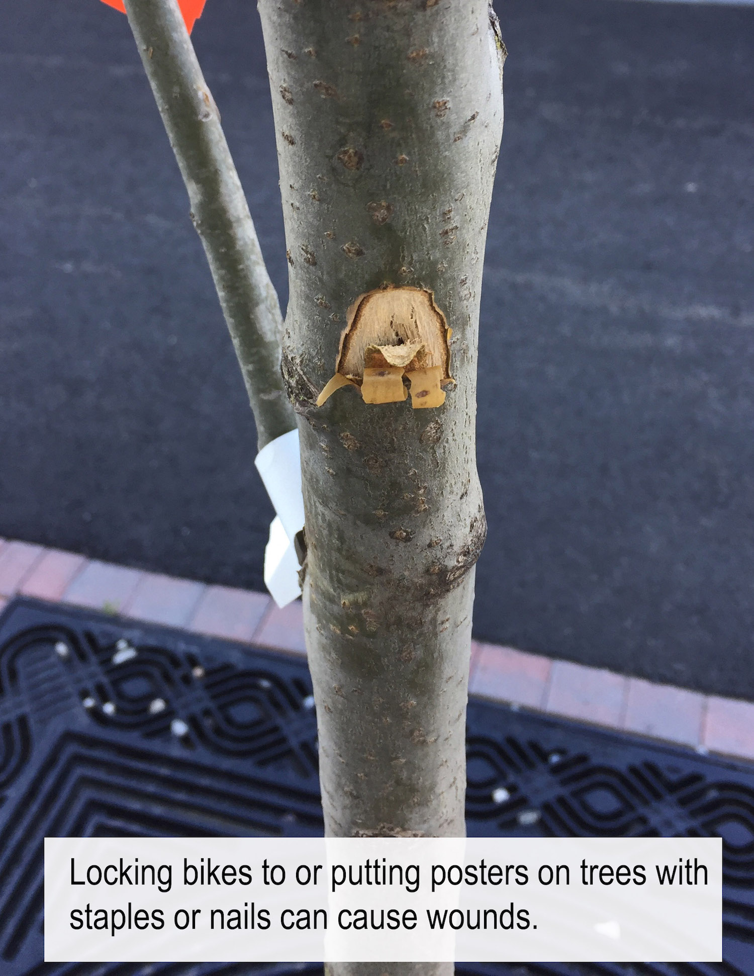 Locking bikes to, or putting posters on, trees with staples or nails can wound the tree.