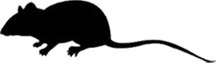 Mouse silhouette