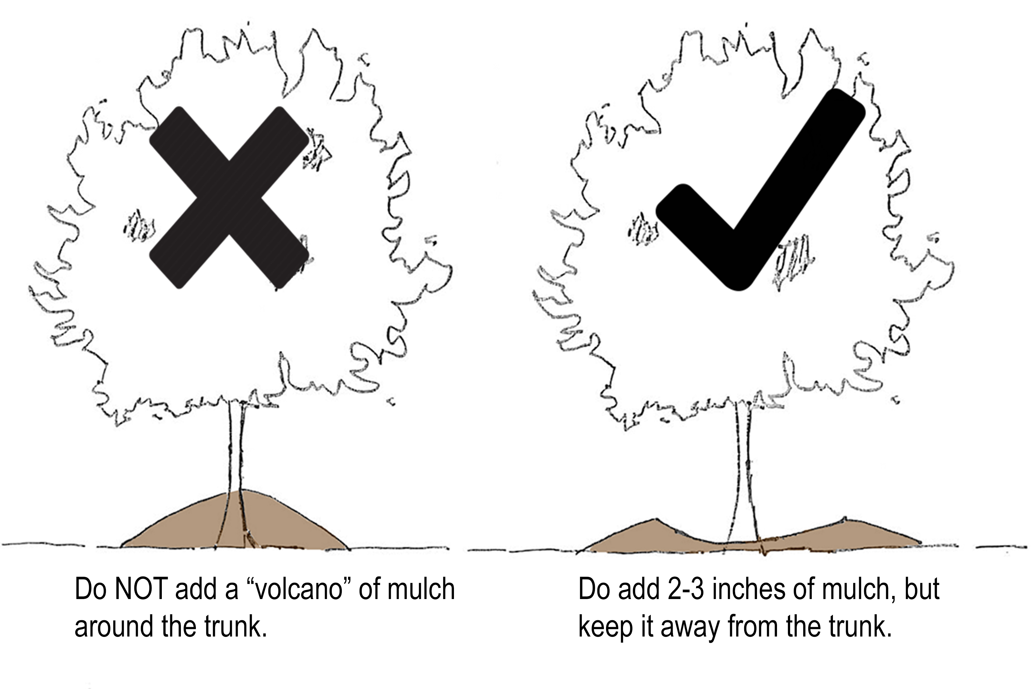 "Add 2-3"" of mulch around trees, but keep it away from the trunk! Mulch ""volcanoes"" can damage trees."