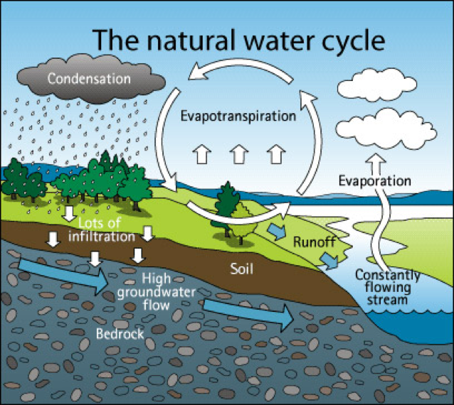 Graphic shows that rainwater in natural environments are more easily able to infiltrate the soil to replenish streams and groundwater.