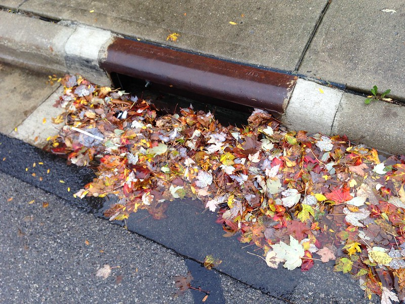 Storm drain beginning to be clogged with leaves