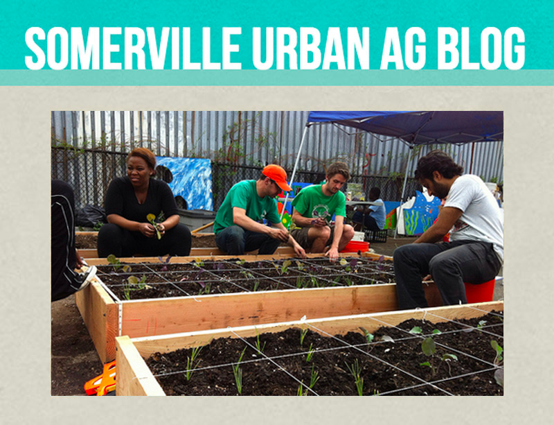 Somerville Urban Ag Blog