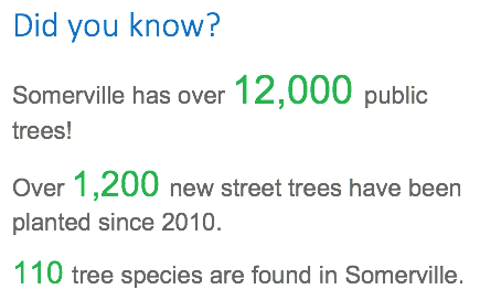 Did you know? Somerville has over 12,000 public trees! Over 1,200 new street trees have been planted since 2010. There are 110 tree species in Somerville.