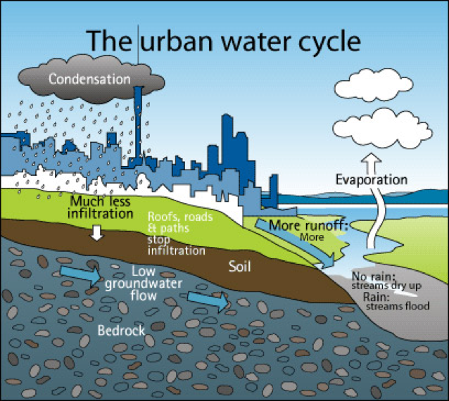 Graphic shows that rainwater in urban environments is prevented from penetrating soil by roofs, roads, and paths, thereby causing more runoff and the drying up of streams.